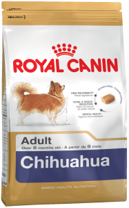 k_chihuahua-adult