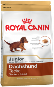 k_dachshund-junior